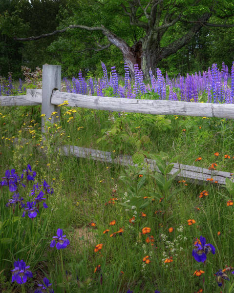 Photograph - New Hampshire Wildflowers by Bill Wakeley