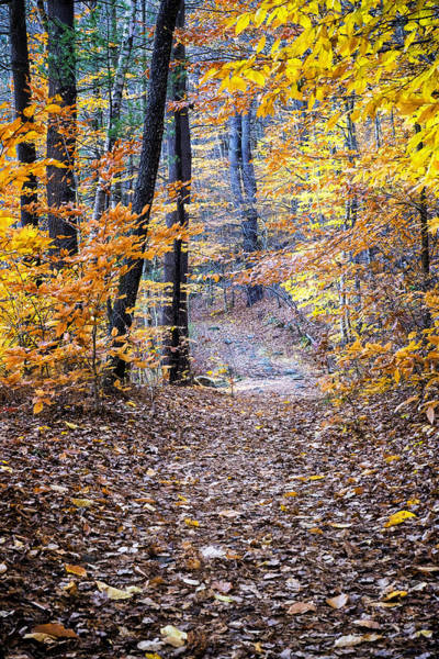 Photograph - New Hampshire Woods by Tom Singleton