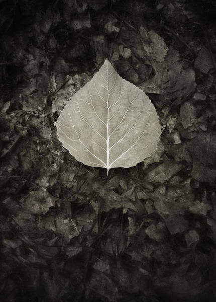 Wall Art - Photograph - New Leaf On The Old by Scott Norris