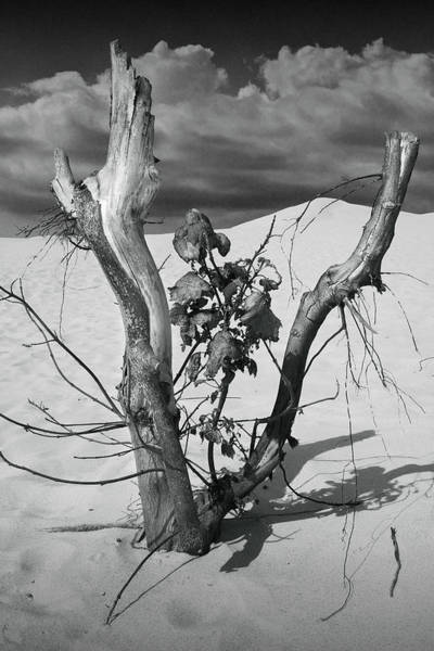 Photograph - New Life Between Dead Tree Branches by Randall Nyhof