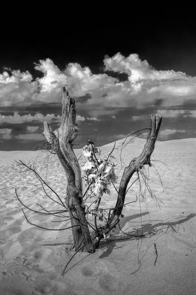 Photograph - New Life Sprouting On The Dunes by Randall Nyhof