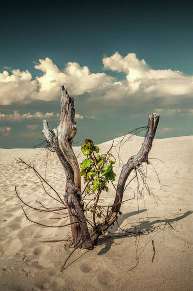 Photograph - New Life Sprouting With Dead Trees And Cloudy Sky by Randall Nyhof