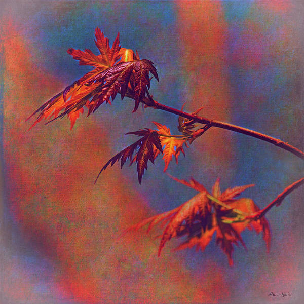 Photograph - New Maple Tree Leaves Nostalgic by Anna Louise