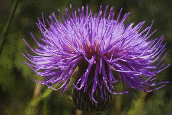 New Mexican Thistle Art Print