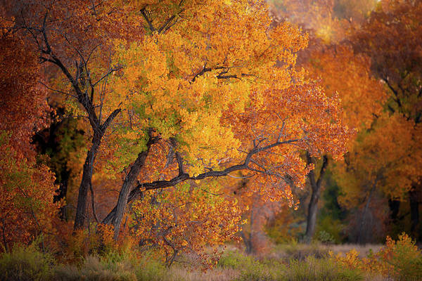 Photograph - New Mexico Gold by Jeff Phillippi