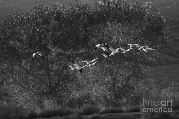 Photograph - New Mexico Light by John F Tsumas