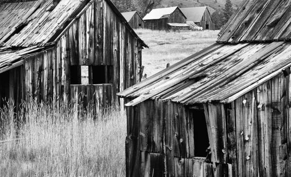Plumas County Photograph - Abandoned Cabins by Mick Burkey
