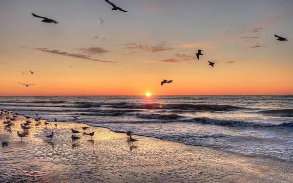 Photograph - New Moon Birds by Ree Reid