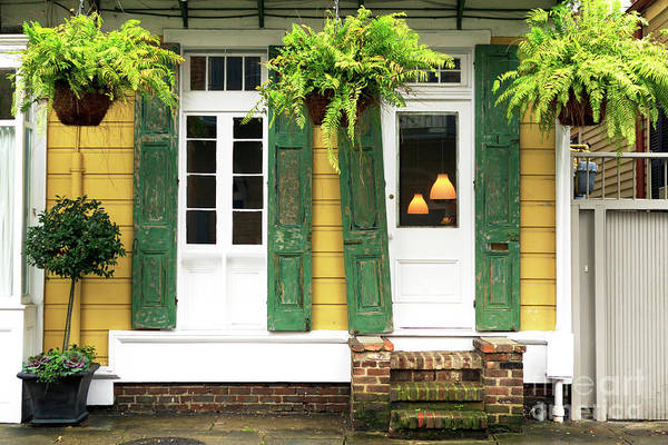 Photograph - New Orleans Row House Plants by John Rizzuto