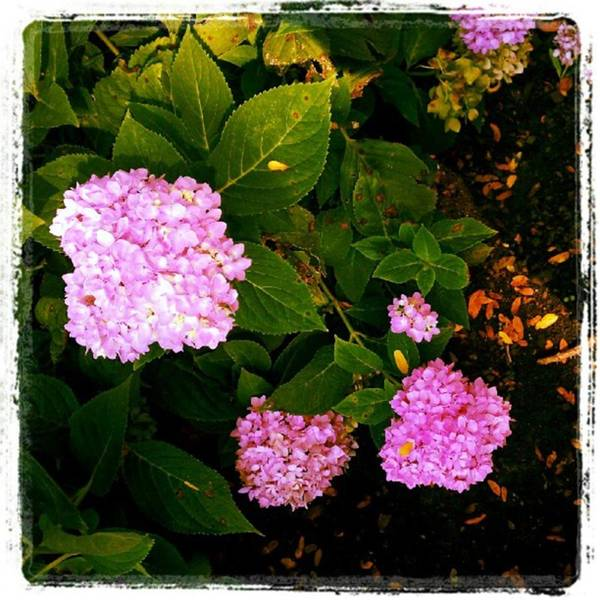 Photograph - New Plantings At Aic by Tammy Winand