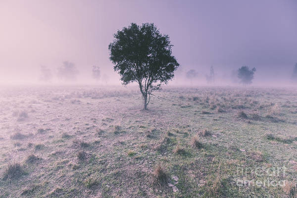 Purple Haze Photograph - New South Wales Foggy Meadow by Jorgo Photography - Wall Art Gallery