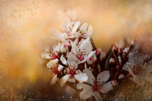 Photograph - New Spring Blooms by Jai Johnson