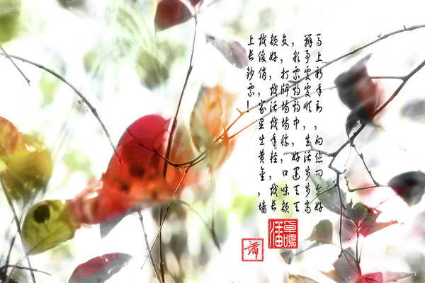 Wall Art - Photograph - New Year Greeting by John Poon