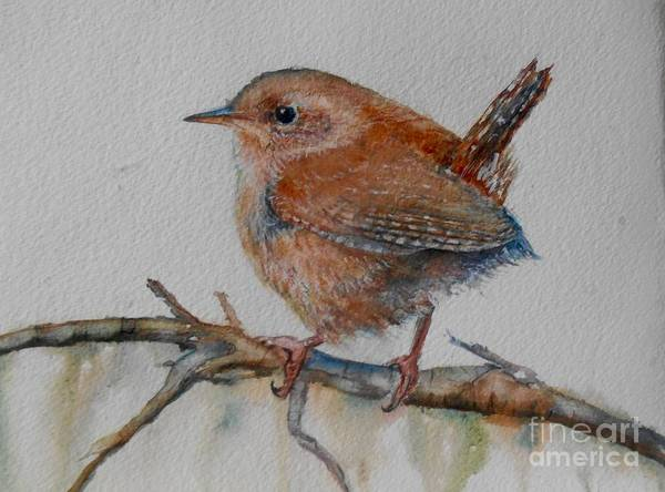 Wren Painting - New Year Wren by Patricia Pushaw