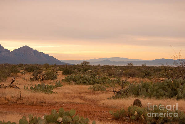 Photograph - New Years Day Arizona by Donna Greene