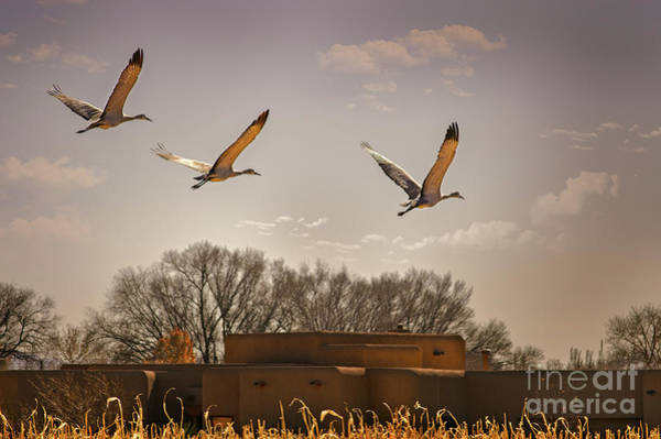 Flight Of The Cranes Art Print