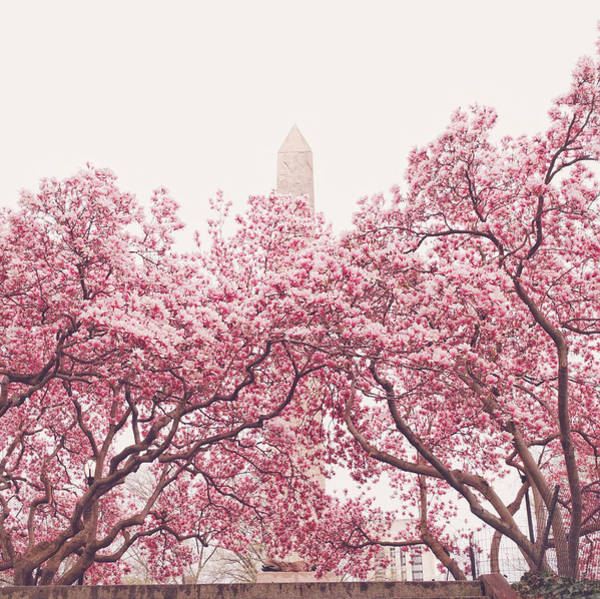 Wall Art - Photograph - New York City - Springtime Cherry Blossoms Central Park by Vivienne Gucwa