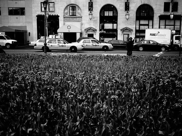 Photograph - New York Tulips by M G Whittingham
