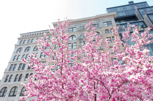 Wall Art - Photograph - New York In The Springtime by Vivienne Gucwa