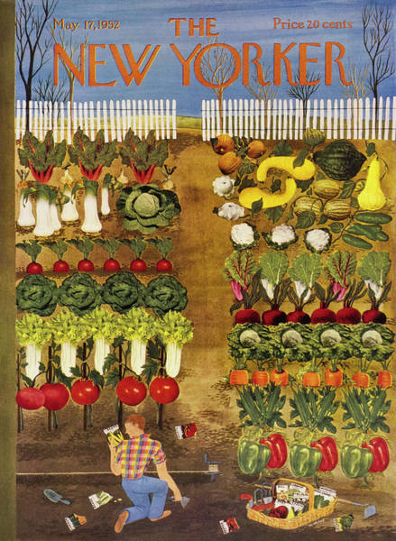 Vegetables Painting - New Yorker May 17 1952 by Ilonka Karasz