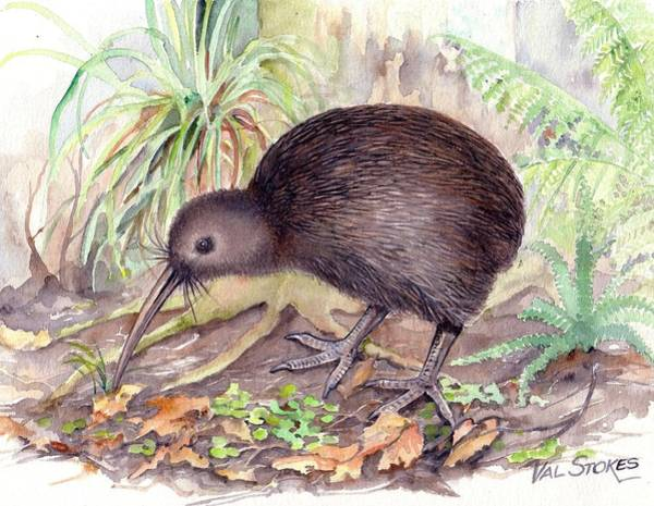 Painting - New Zealand Kiwi by Val Stokes