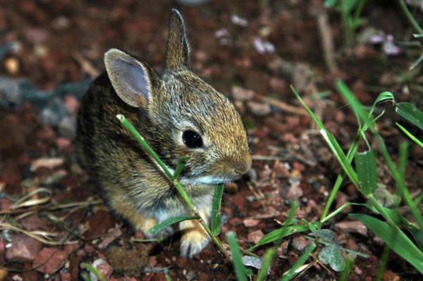 Wall Art - Photograph - Newborn Bunny by Alynne Landers