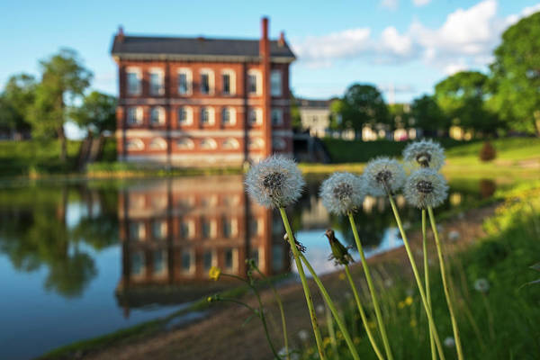 Photograph - Newburyport Ma Frog Pond Bartlett Mall Superior Courthouse Dandelions by Toby McGuire