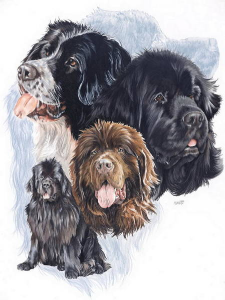 Mixed Media - Newfoundland Medley by Barbara Keith