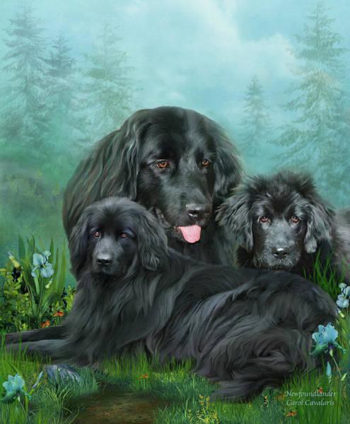 Canine Mixed Media - Newfoundlander by Carol Cavalaris
