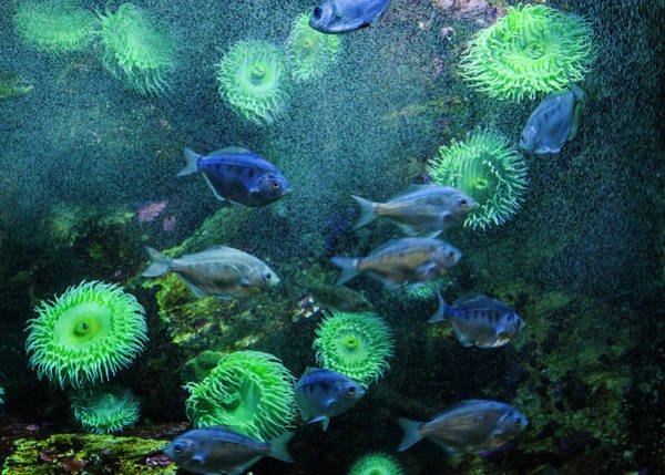 Photograph - Newport Aquarium by Robert Potts