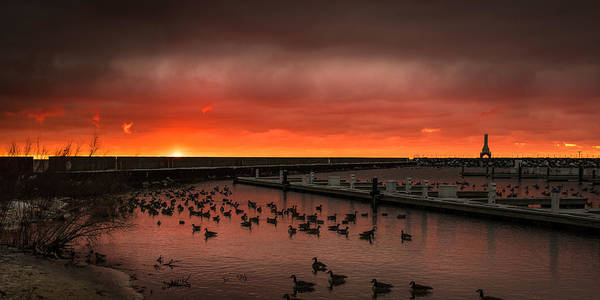 Photograph - Newport Geese by James Meyer