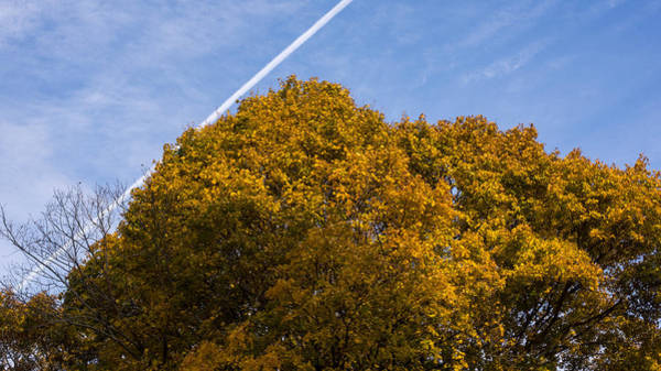 Photograph - Newton Upper Falls Yellow Autumn Tree by Toby McGuire