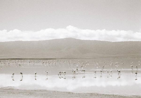 Photograph - Ngorongoro Flamingos by Shaun Higson