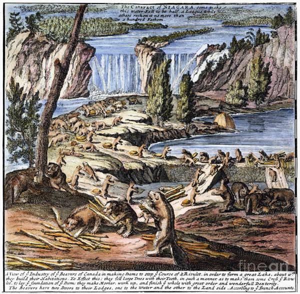 Photograph - Niagara Falls: Beavers, 1715 by Granger