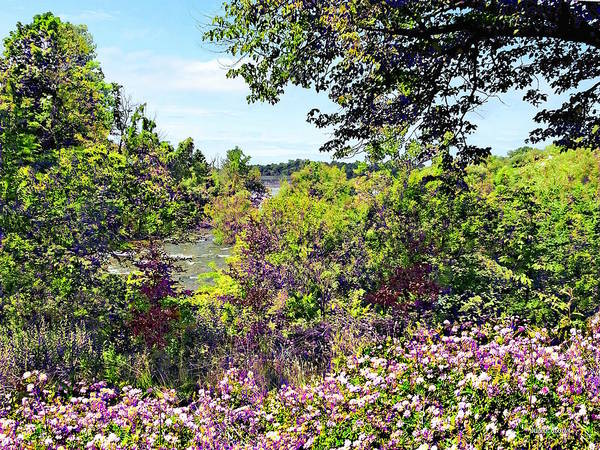 Photograph - Niagara Falls Ny - Wildflowers On Three Sisters Islands by Susan Savad
