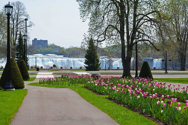 Photograph - Niagara Falls Through The Tulips by Toby McGuire