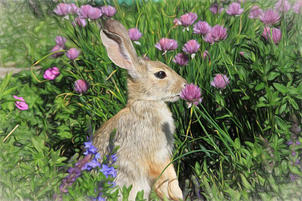 Cottontail Photograph - Nibbling On Chives by Donna Kennedy