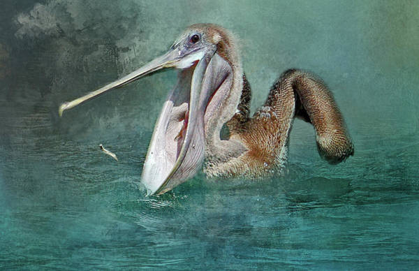 Gular Photograph - Nice Catch by HH Photography of Florida