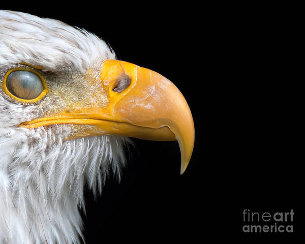Photograph - Nictitating Membrane by Eyeshine Photography