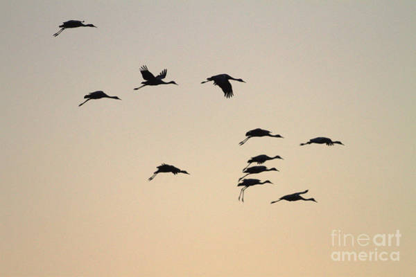 Wall Art - Photograph - Night Amongst  The Cranes  by Ruth Jolly
