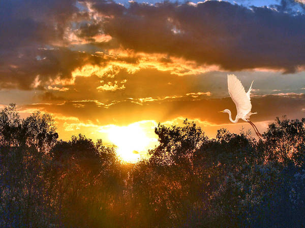 Night-heron Photograph - Night Approaches by Adele Moscaritolo