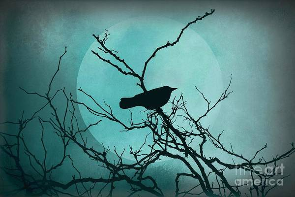 Photograph - Night Bird by Patricia Strand