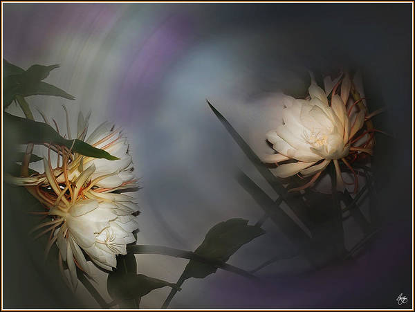 Photograph - Night Blooming Cereus In Moonlight by Wayne King