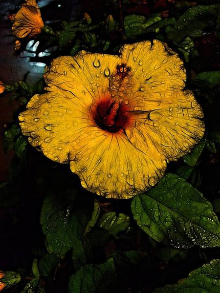 Photograph - Night Blooms by Nick Heap