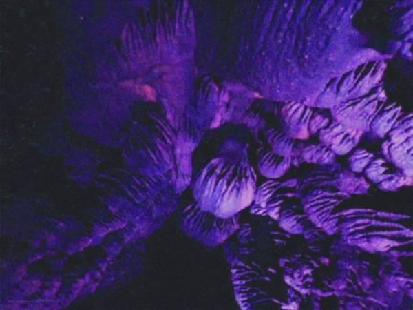 Digital Art - Night Crawl by Vincent Green