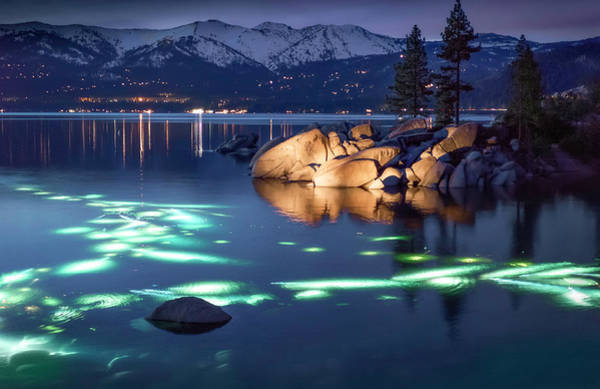 Photograph - Night Dive - Lake Tahoe by Tony Fuentes