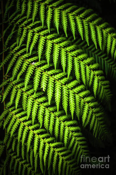 Rain Forest Photograph - Night Forest Frond by Jorgo Photography - Wall Art Gallery