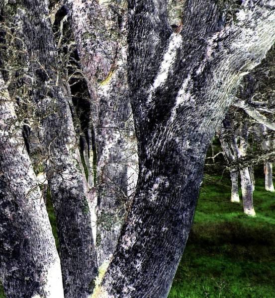 California Oak Digital Art - Night Grove by Will Borden