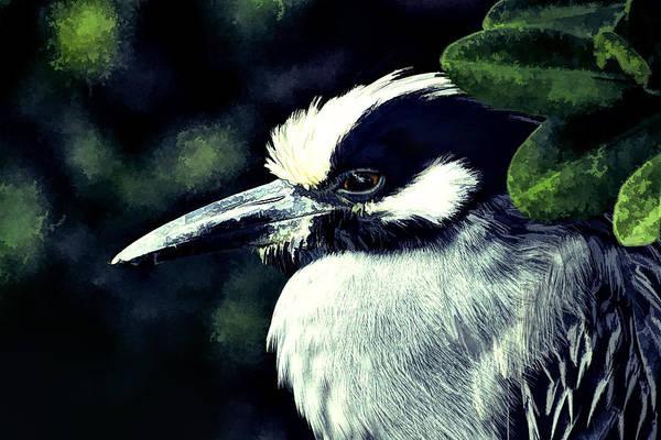 Photograph - Night Heron 1 by Richard Goldman