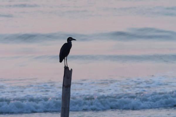 Photograph - Night Heron Dawn Post by Paul Rebmann